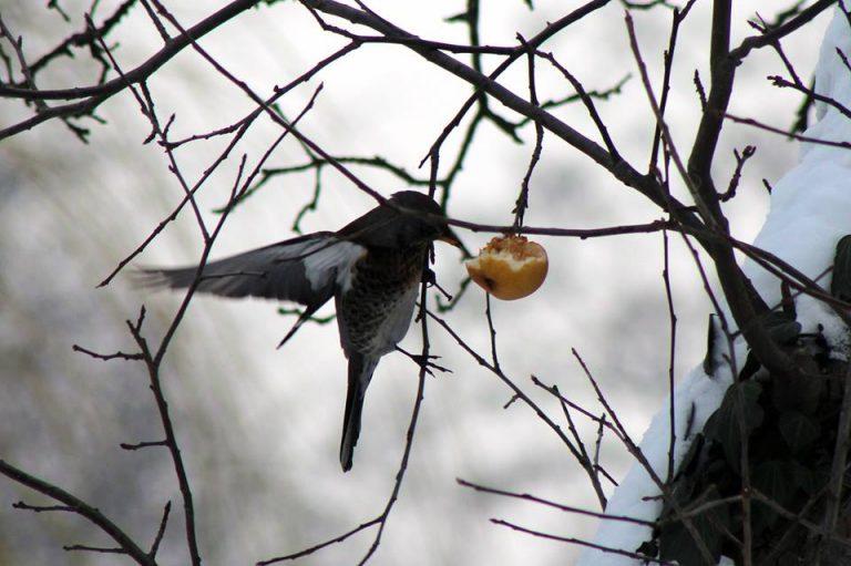 Marginałki sądeckie: ptaki wynocha z uzdrowiska!