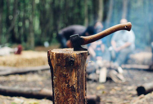 """Nowoczesna w akcji """"Posadź drzewo, posadź szyszkę"""""""