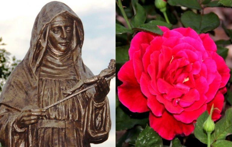 Nowy Sącz: czerwone róże dla świętej od spraw beznadziejnych