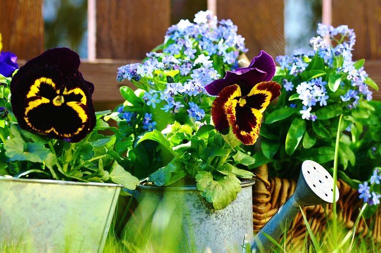 Nowy Sącz – miasto kwiatów i zieleni. Startuje konkurs ogrodowo-balkonowy