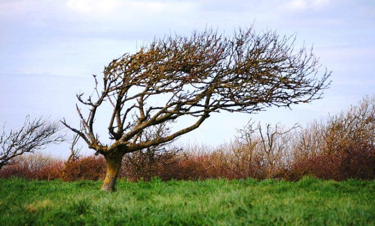 Sądecczyzna: Brak prądu, powalone drzewa czyli kolejny dzień zmagań z silnym wiatrem