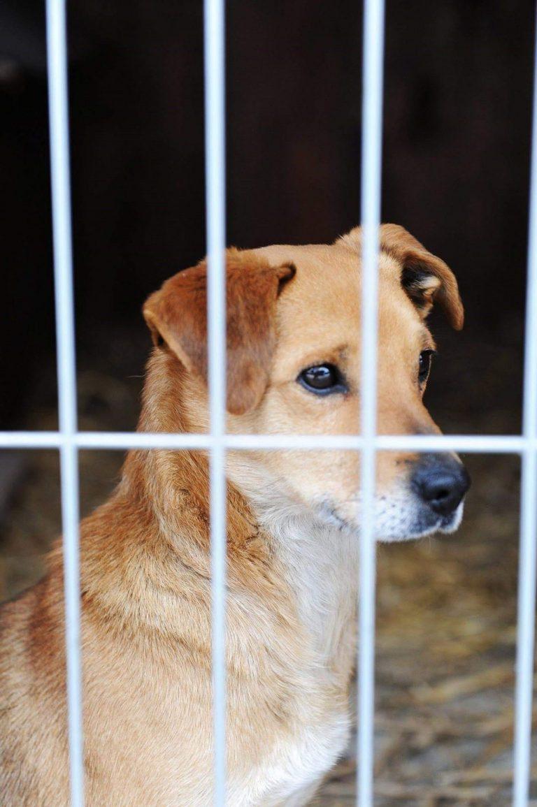 Psiaki pilnie potrzebują pomocy ludzi. Poszukiwani wolontariusze do schroniska dla zwierząt!