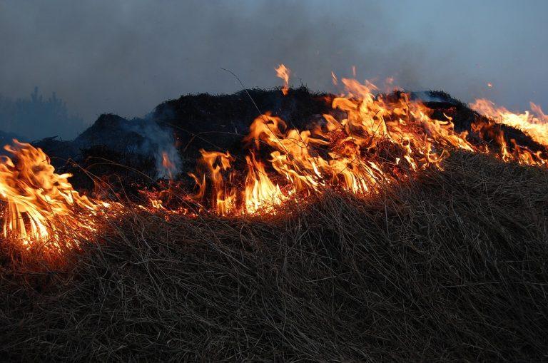 Sezon na wypalanie traw niestety rozpoczęty