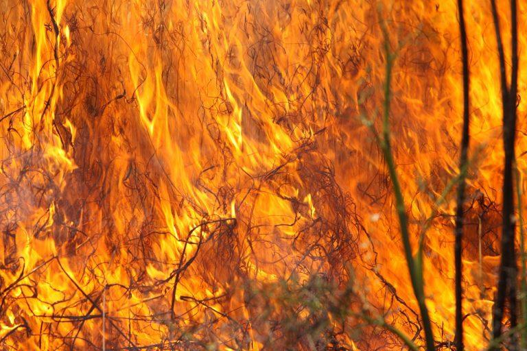 Sądecczyzna: Pożary traw to prawdziwa plaga. 34 przypadki w ciągu ostatniej doby