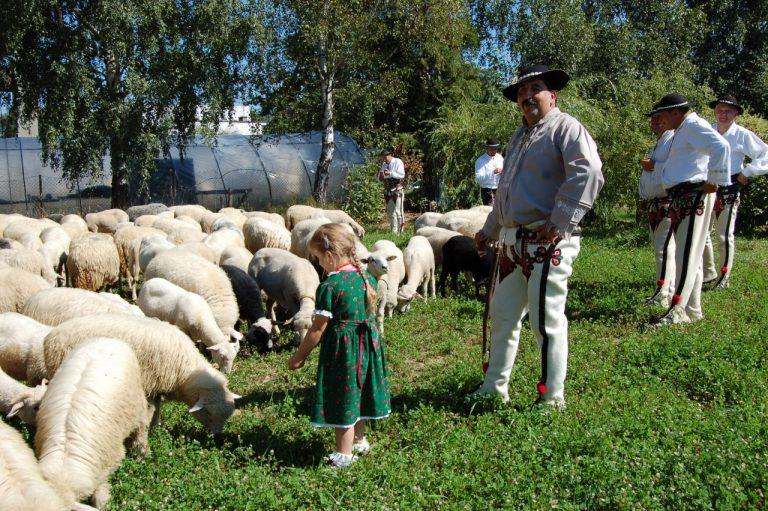Nawojowa, 7-8 września: promocyjno – handlowa wystawa rolnicza AGROPROMOCJA!