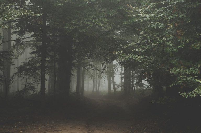 Wracał przez las, poślizgnął się i spadł do strumienia. Odnaleźli go po kilku godzinach