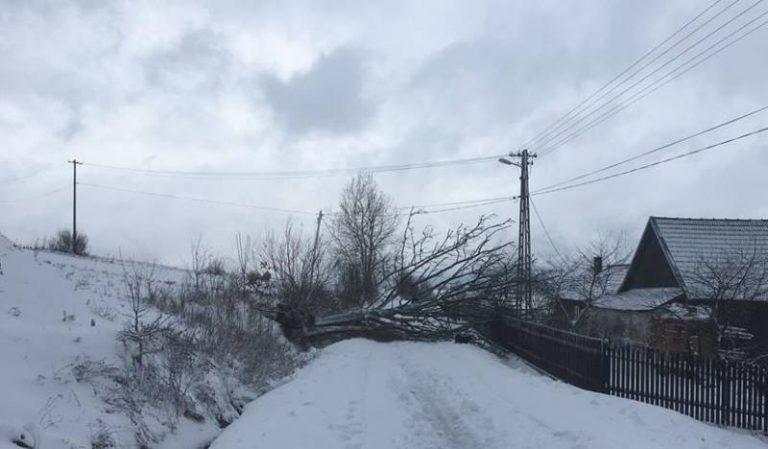 Sądecczyzna: Podmuchy wiatru powalały drzewa