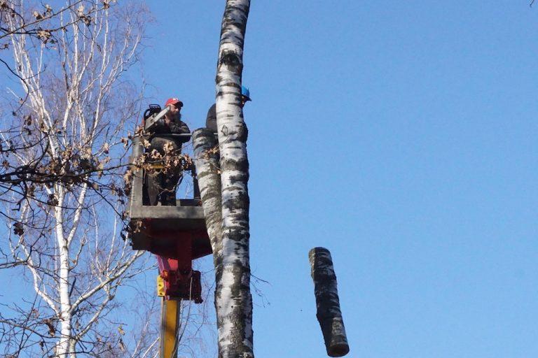 Pierwszy krok do metamorfozy parku Strzeleckiego: trwa wycinka drzew [FILM]