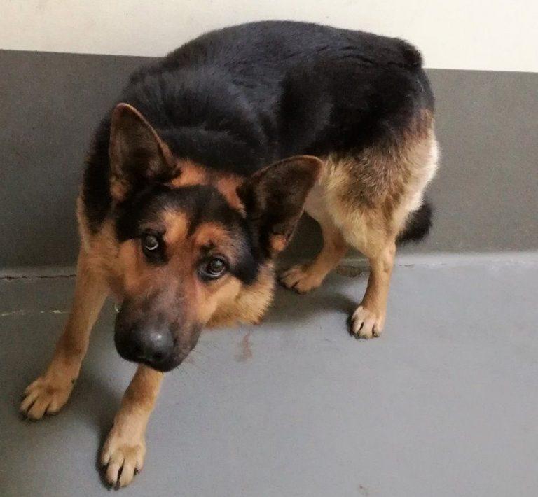 Na ulicy Łokietka znaleziono psa. Rozpoznajesz go?