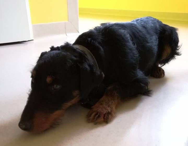 Kolejny pies znaleziony w Gorlicach