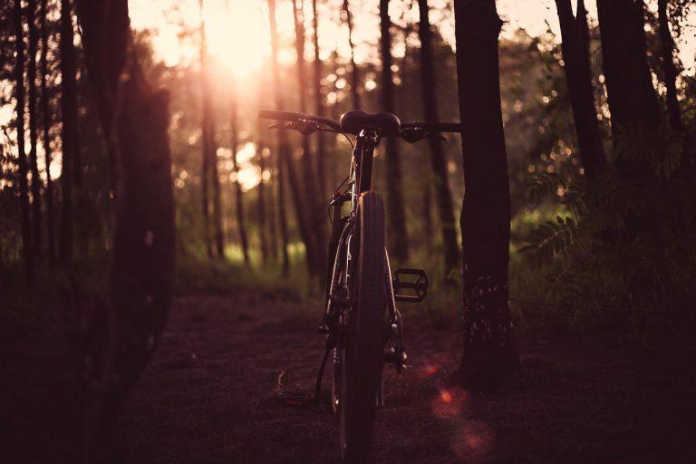 W zaroślach znaleziono rower. Czeka na właściciela