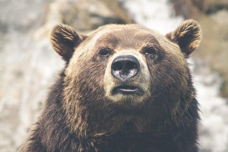 UWAGA! Mamy na Sądecczyźnie niedźwiedzia!