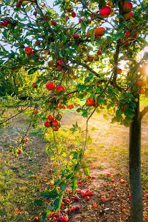 """Podziel się swoją poezją i walcz o """"złotą gałązkę jabłoni"""""""