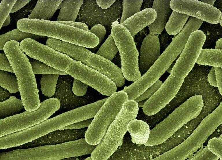 Czaczów: niebezpieczne bakterie w szkolnej wodzie