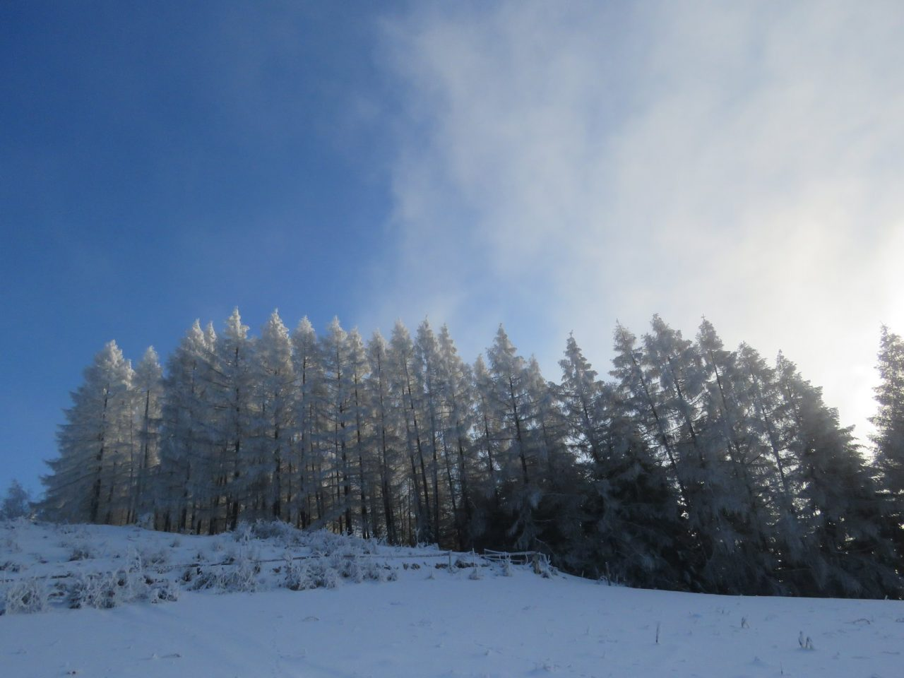 okolice Muszyny, zima