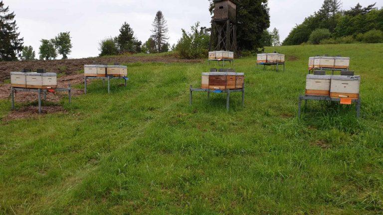 """Znów grasuje złodziej uli. W Wołowcu zaginęły cztery pszczele rodziny. Jest nagroda za wskazanie ,,porywacza"""""""
