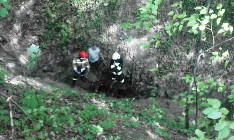Lipie: krowa spadła z ok. 10 metrów. Z pomocą ruszyli strażacy