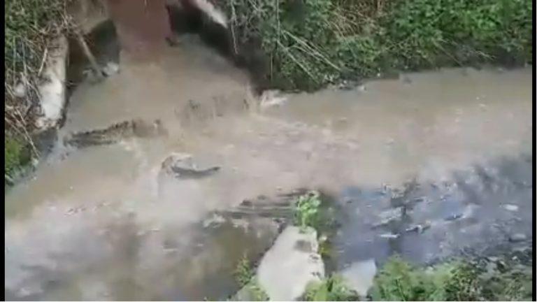 Awaria oczyszczalni ścieków w Kamienicy. Niedoczyszczona woda spływa do rzeki