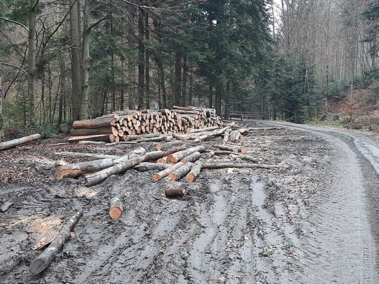 Wyrąb lasu, zaorane polany beskidzkie – atrakcyjność turystyczna regionu umiera?