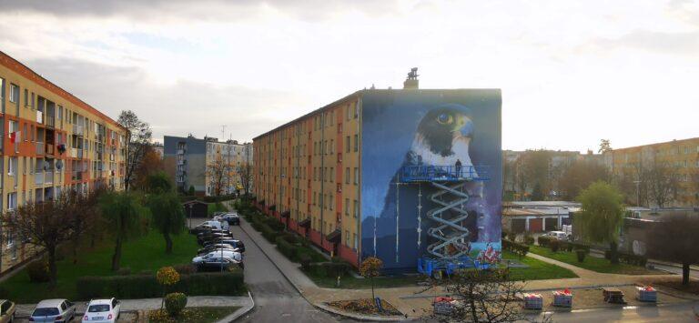 Nowy Sącz,ul.Broniewskiego: Sokół przysiadł na bloku… [zdjęcia]