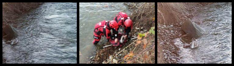 Nowy Sącz: Łabędź potrzebował pomocy. Strażacy ruszyli na ratunek