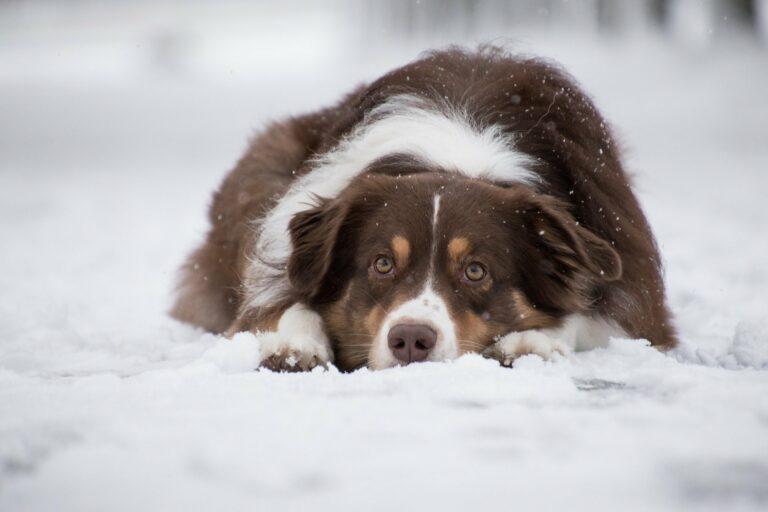 Właściciele psów łamią przepisy dotyczące zabezpieczania czworonogów w zimie. Interweniuje TOZ