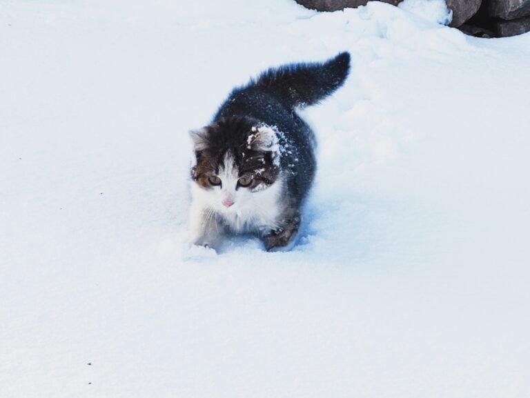Przed nami intensywne opady śniegu
