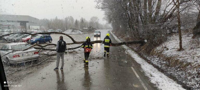 Korzenna. Drzewo uszkodziło samochody