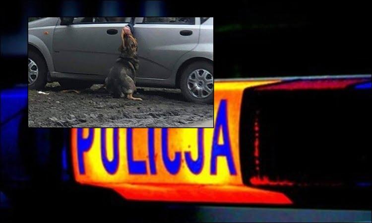 Kamionka Wielka. Dlaczego właściciel nie wziął psa do samochodu? Policja odwiedziła 36-latka i sprawdziła w jakim stanie jest zwierzę