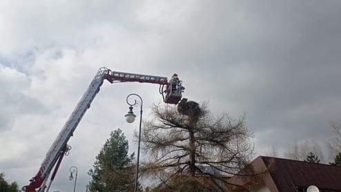 Złockie. Strażacy ruszyli na pomoc bocianowi