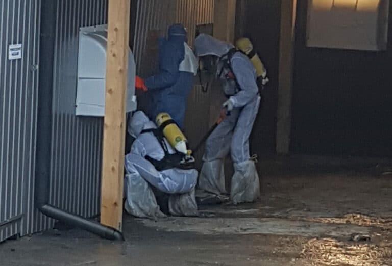 Sześć ognisk ptasiej grypy w naszym regionie. Zagazowano już prawie 40 tysięcy kur, indyków i kaczek