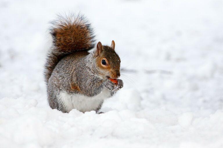 We wtorek załamanie pogody. Może spaść nawet 40 cm. śniegu
