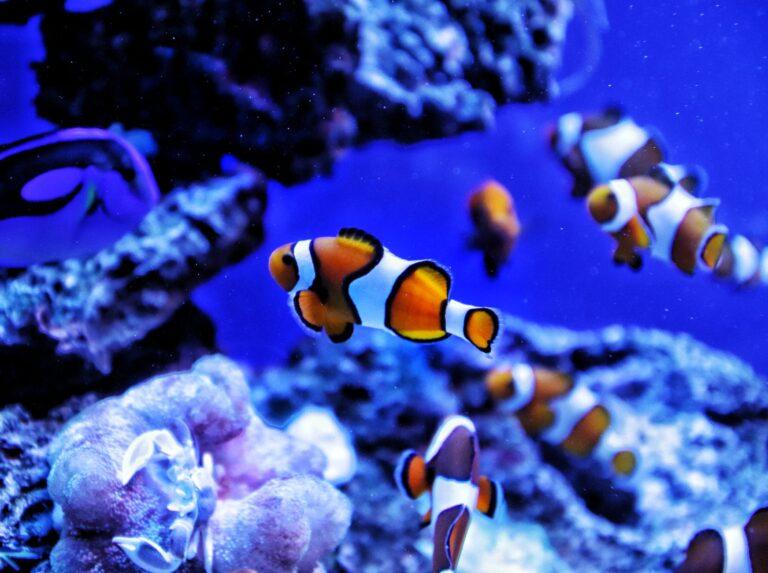 Akwariowe dekoracje – jak upiększyć swoje akwarium?