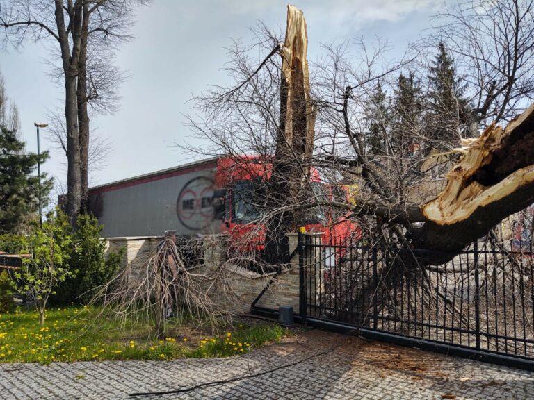 Nowy Sącz. Samochód ciężarowy uderzył w drzewo na ulicy Nawojowskiej
