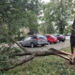 Nowy Sącz, połamane drzewa