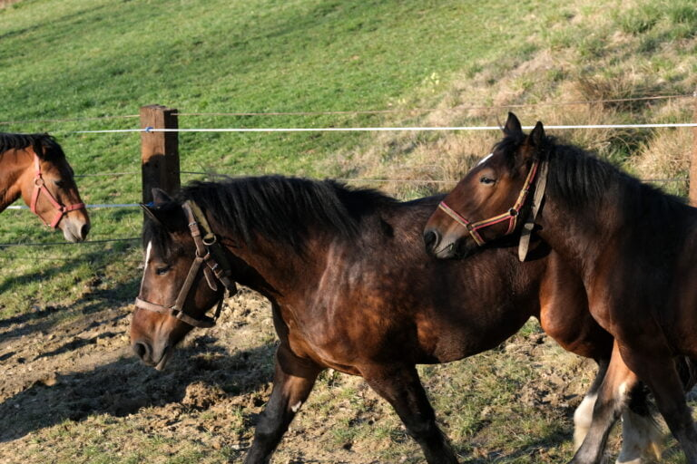 Uwaga! W naszym regionie grasują złodzieje koni