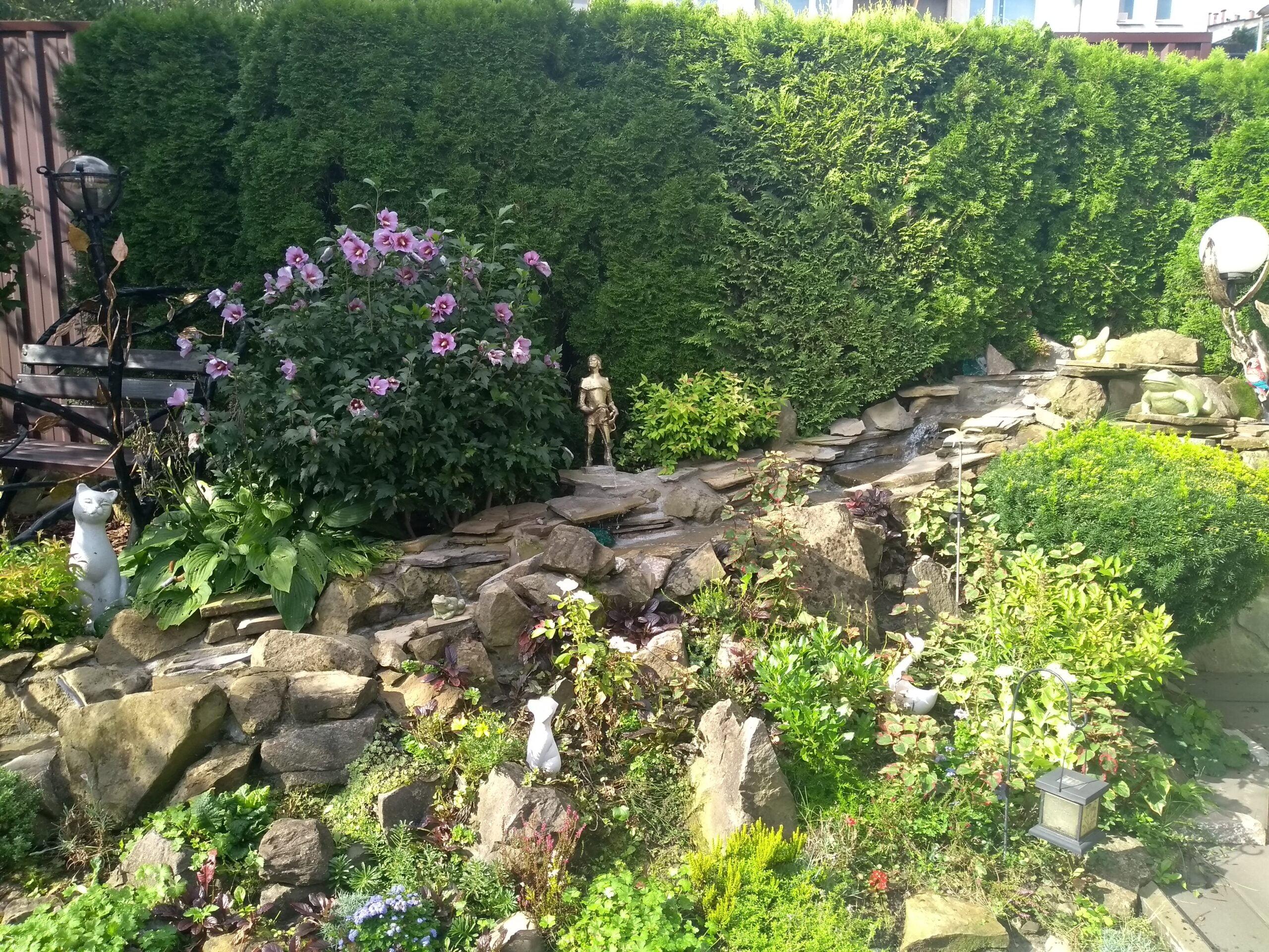 Rycerzyk w ogrodzie Jerzego Gwiżdża
