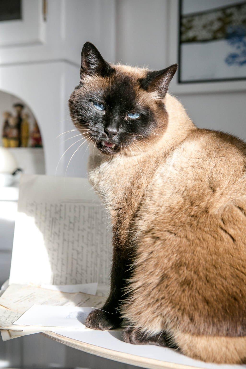 kot Antoni fot. Piotr Droździk