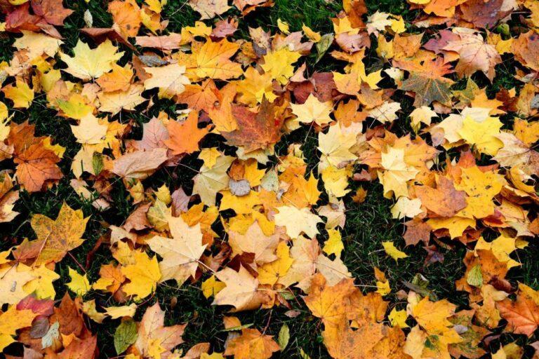 Nadchodzi astronomiczna jesień – początek w środę wieczorem