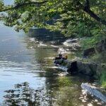 Poszukiwania, Jezioro Rożnowskie, 76-latek, Gródek nad Dunajcem