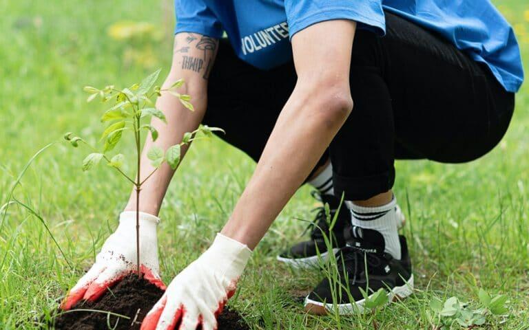 Nadleśnictwa rozdadzą darmowe drzewka