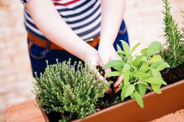 Uprawa warzyw w pojemnikach